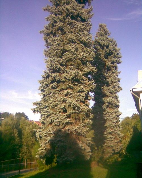 OBRÁZEK : strom_01.jpg