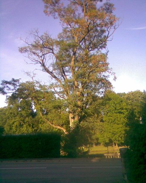OBRÁZEK : strom_02.jpg