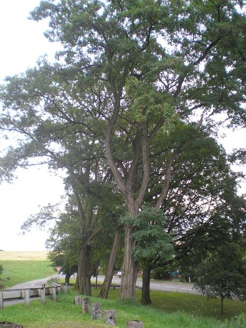 OBRÁZEK : strom_05.jpg